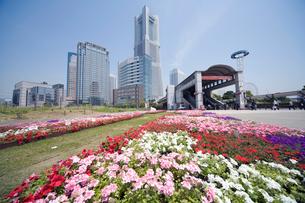 桜木町駅前の花壇とみなとみらいランドマークタワーの写真素材 [FYI01450977]