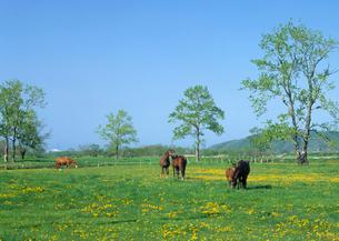 馬の親子の写真素材 [FYI01451565]