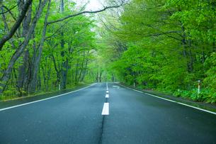 雨上がりの新緑の道の写真素材 [FYI01451987]