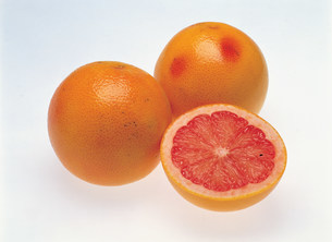 グレープフルーツの写真素材 [FYI01452465]