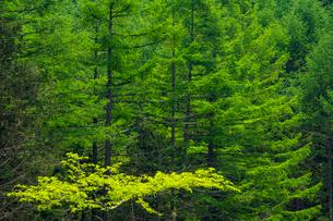 新緑の森の写真素材 [FYI01452764]