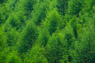 新緑の森の写真素材 [FYI01453231]