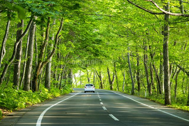 新緑の道と車の写真素材 [FYI01453283]