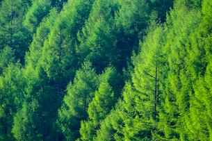 新緑の森の写真素材 [FYI01453481]