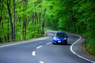 新緑の道と自動車の写真素材 [FYI01453552]