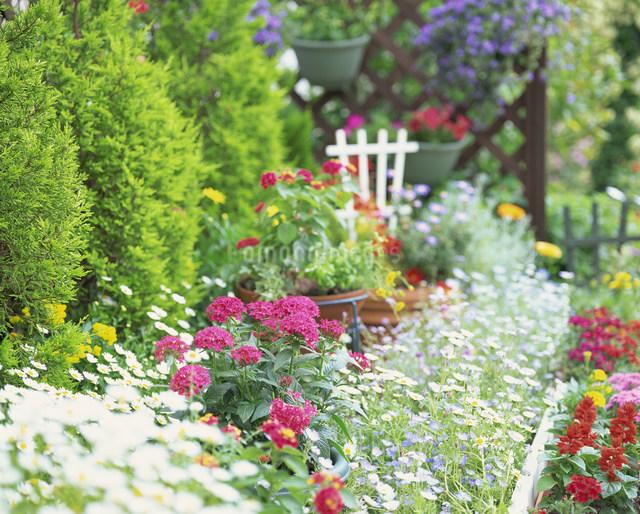 花のある庭の写真素材 [FYI01454935]