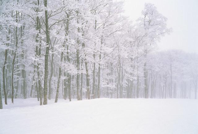 雪景色の写真素材 [FYI01455451]