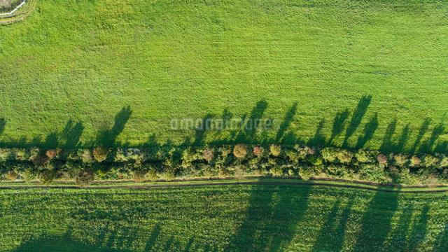 ドローンによる蒜山高原の芝生広場の写真素材 [FYI01455775]