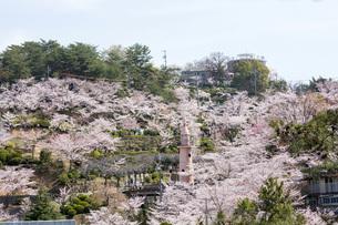 千光寺公園の桜の写真素材 [FYI01455907]