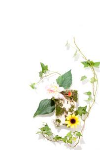 カラフルな花とコンセントの写真素材 [FYI01455957]