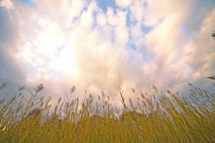 ススキと雲の写真素材 [FYI01456690]