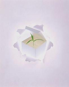 新芽のイメージのイラスト素材 [FYI01457342]