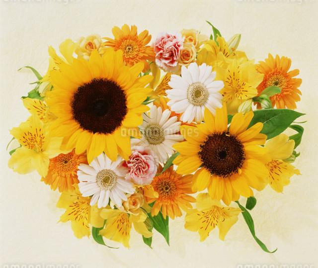 花のイメージの写真素材 [FYI01457575]
