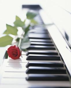 ピアノとバラの写真素材 [FYI01457913]