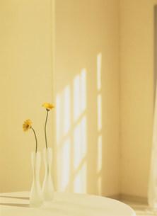 花瓶に活けた花の写真素材 [FYI01458121]