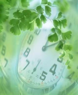 葉と時計のイメージの写真素材 [FYI01458317]