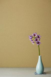 和風の花器に生けたリューココリネの花の写真素材 [FYI01458941]