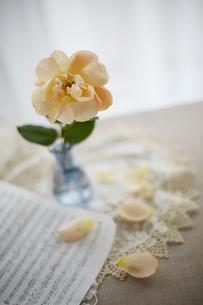 ガラス瓶のピンクのバラの花の写真素材 [FYI01459260]