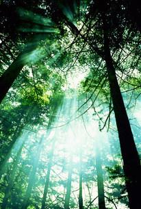 木漏れ日の写真素材 [FYI01459304]