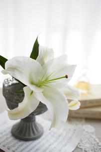 カサブランカの花の写真素材 [FYI01459326]