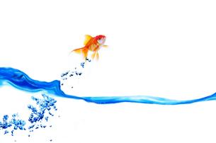 水面から飛ぶ金魚の写真素材 [FYI01460161]