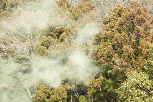 山のスギ花粉の写真素材 [FYI01460316]
