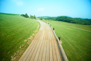 晴天の日の草原と一本道の写真素材 [FYI01460379]