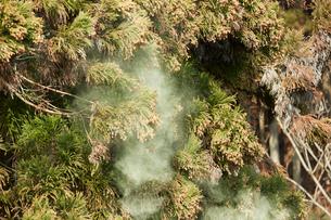 飛散する山の花粉の写真素材 [FYI01460479]