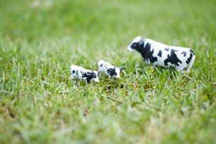 草原に置かれたミニチュアの牛の写真素材 [FYI01460615]