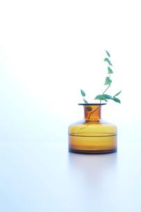 キイロいガラスの花器の写真素材 [FYI01460679]