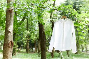 森の中で枝に掛けられた白いシャツの写真素材 [FYI01460690]