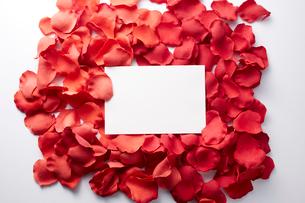 フェイクの花びらの上の白い紙の写真素材 [FYI01461319]
