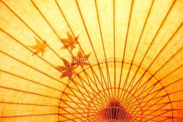 もみじの乗った和傘の内側の写真素材 [FYI01461353]