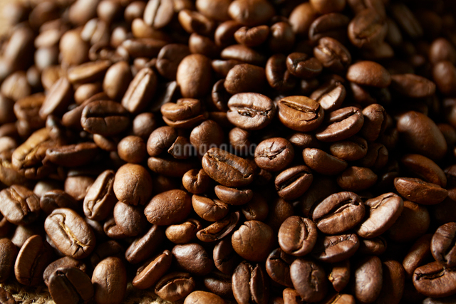 コーヒー豆の写真素材 [FYI01461453]