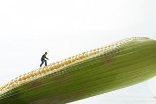 トウモロコシを登るビジネスマンの写真素材 [FYI01461469]