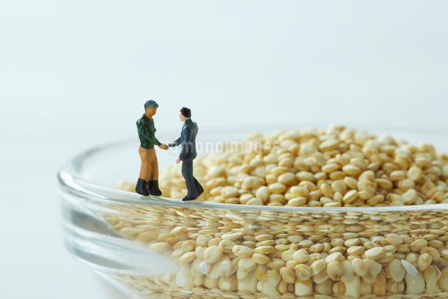 キヌアの前で握手をするビジネスマンと生産者の写真素材 [FYI01461732]
