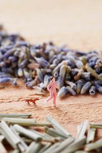 ハーブ畑をジョギングする女性と犬の写真素材 [FYI01461784]