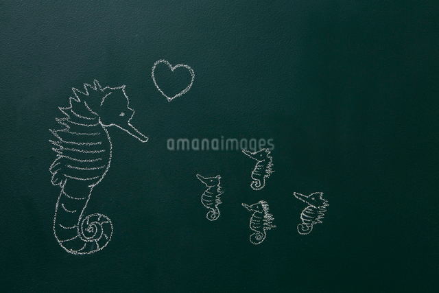黒板に白いチョークで描いたタツノオトシゴ親子のイラスト素材 [FYI01462045]