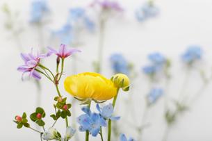 並べられた数種類の花々の写真素材 [FYI01462055]