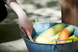 バケツの中で冷えた野菜を選ぶ手の写真素材 [FYI01462394]