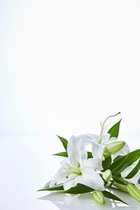 反射する板に置かれたユリの花の写真素材 [FYI01462471]