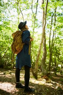 森林浴を楽しむ一人の女性の写真素材 [FYI01462546]