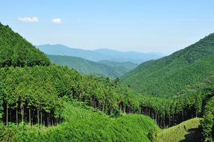植林された山並の写真素材 [FYI01463038]