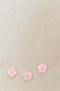 和紙の桜の写真素材 [FYI01463110]