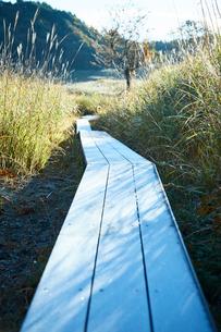 秋の砥峰高原の朝の写真素材 [FYI01463486]