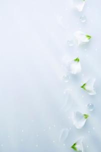水色を背景に整列して置かれた複数のガラス玉と花びらの写真素材 [FYI01463780]