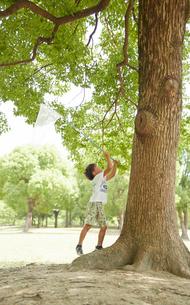 木に止まった虫を虫網で捕まえようとする男の子の写真素材 [FYI01463872]