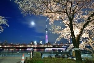 隅田公園から見た東京スカイツリーの夜景の写真素材 [FYI01463966]