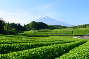 新茶畑と富士山の写真素材 [FYI01464190]