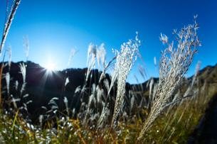 秋の砥峰高原の朝の写真素材 [FYI01464387]